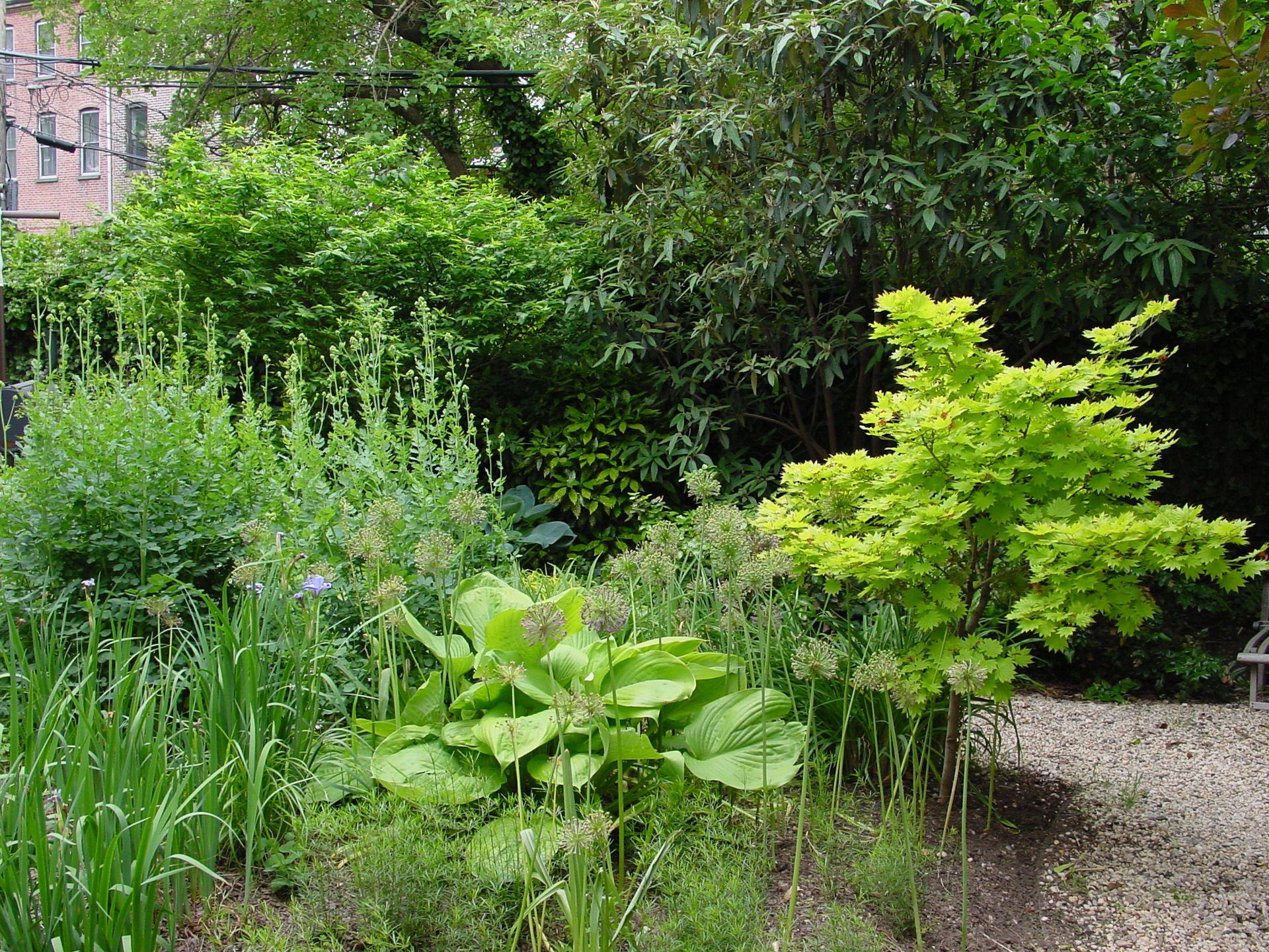 Townhouse Gardens Archives Cynthia Gillis Garden Design